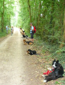 chiens_assis_passage_velo